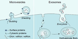 How do I ... measure extracellular vesicles in my samples?