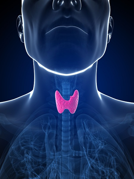 Liothyronine (L-T3) Treatment in hypothyroidism | Society