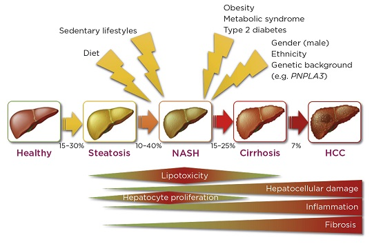 Center for Diabetes and Endocrine Research (CeDER)